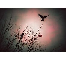 We fly as one, Crow spirit Photographic Print