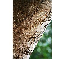 Graffiti Tree, Hyde Park Sydney Photographic Print