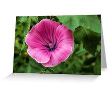 Early Summer Blooms Impressions - Bright Pink Malva Greeting Card