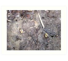 Fiddler Crabs Art Print