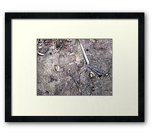 Fiddler Crabs Framed Print