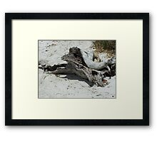 Drift Wood Framed Print