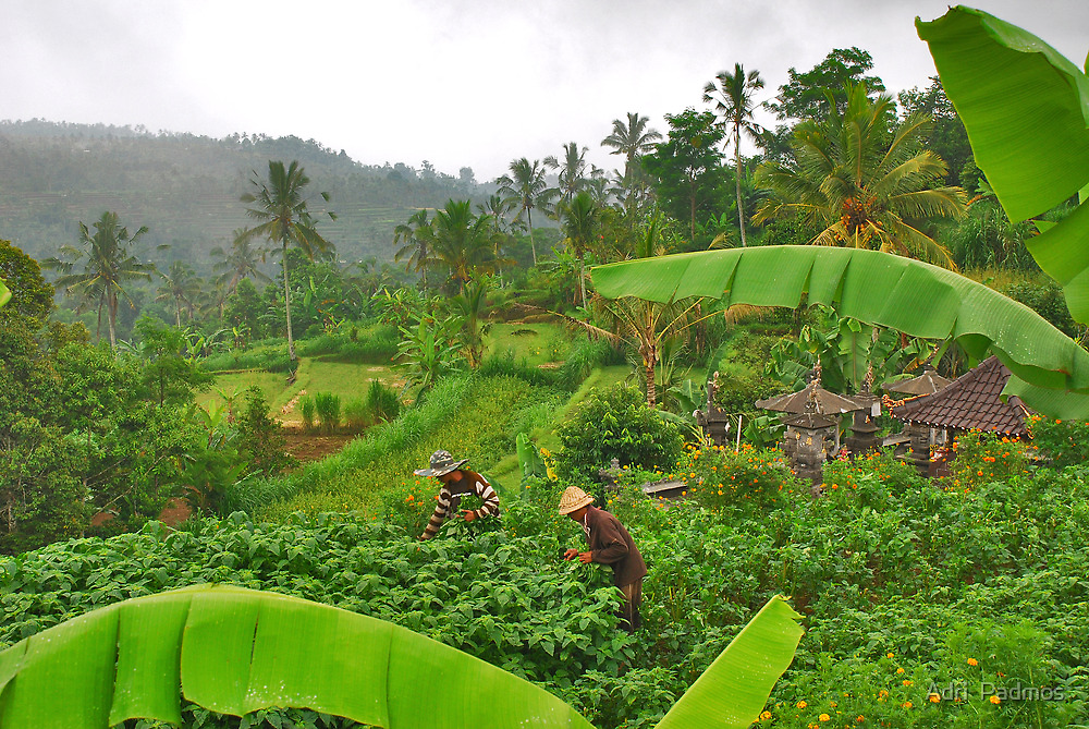 The green heart of Bali by Adri  Padmos