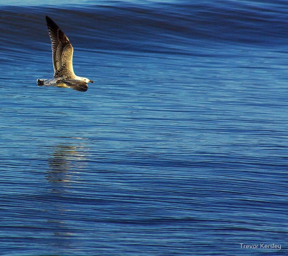 In Flight by Trevor Kersley