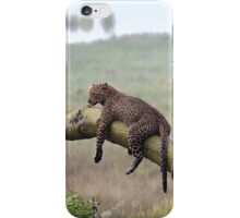 Leopard in the Rain, Lake Nakuru, Kenya iPhone Case/Skin