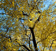 Yellow Leaves by Liberty Benedict