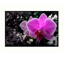 SELECTIVE COLOURED PHALEANOPSIS Art Print