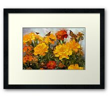 Marigolds and Butterflies Framed Print