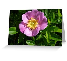 Pink Flower with Bug Greeting Card