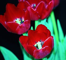 red red tulips by ANNABEL   S. ALENTON