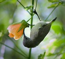 Hang In There by Ann  Palframan