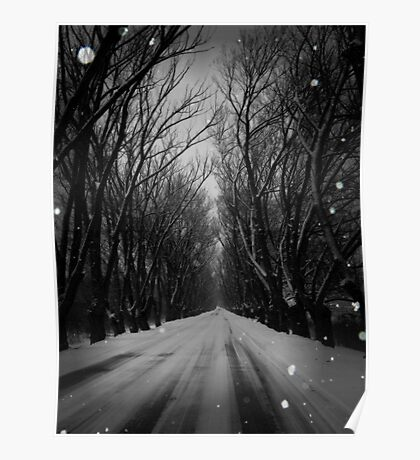 Winter Tree Tunnel Poster