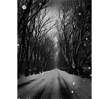 Winter Tree Tunnel Photographic Print