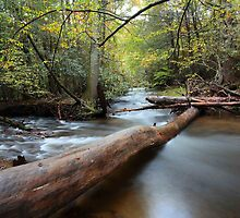 crossing the stream by kathy s gillentine