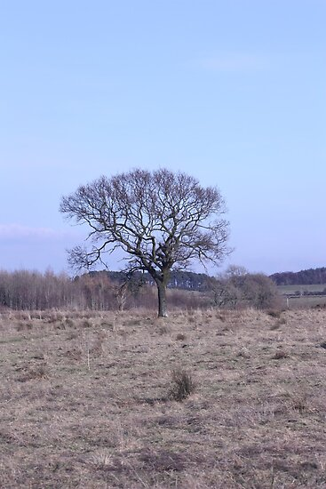 Single tree in February by Ian Coyle
