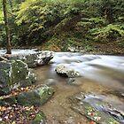 Laurel Creek  by kathy s gillentine