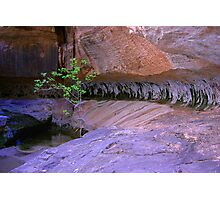 Chlorophyll Photographic Print