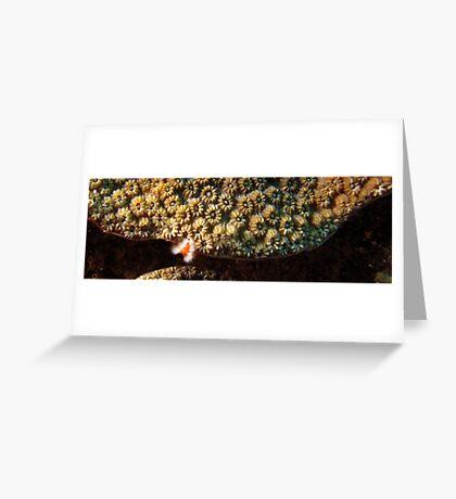 Tuck and Run (pan) Greeting Card