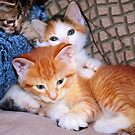 Three Little Kittens by Nadya Johnson