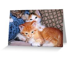 Three Little Kittens Greeting Card