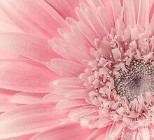 Pink Gerber  by Marie  Cardona