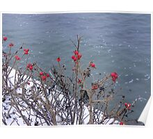 Rose Hips by the winter Sea Poster
