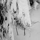 snow veil by Roslyn Lunetta