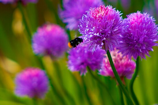 Bee &amp; Chive by Michelle Lovegrove