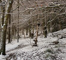 Snow Covered Woodland by EarlCVans