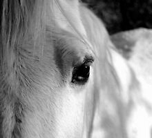 White Horse in the shade by TrickWild