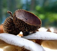 acorns and mushrooms by tego53