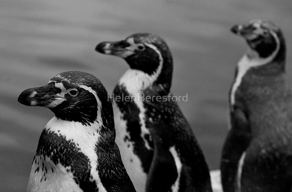P...P...P...Penguin by HelenBeresford