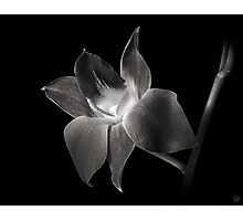 Dendrobium Orchid in Black and White Photographic Print