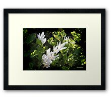 A Moment ~ Caught by the Sun's Rays Framed Print