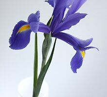 blue iris by OldaSimek