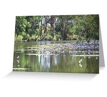 Water Lily in Billabong Greeting Card