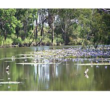 Water Lily in Billabong Photographic Print