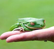 Froggie - white lip green tree frog by Jenny Dean