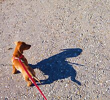 Me & My Shadow by BShirey