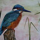 KINGFISHER by Marilyn Grimble