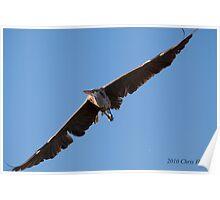 Wingspan! Poster