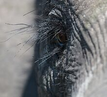 Elephant Eye by Marylou Badeaux