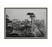 Cypress Point Art Print