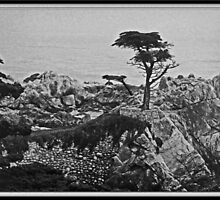 Cypress Point by Chet  King