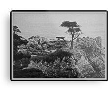 Cypress Point Metal Print