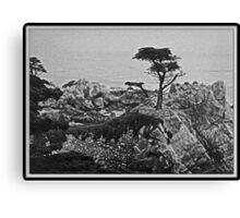Cypress Point Canvas Print