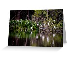 Egrets At Rest Greeting Card