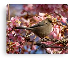 A Bushtit and Her Domain of Pink Canvas Print