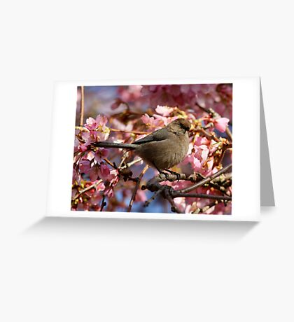 A Bushtit and Her Domain of Pink Greeting Card