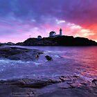Nubble Beauty by GGleason
